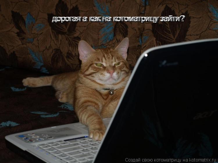 Котоматрица: дорогая а как на котоматрицу зайти? дорогая а как на котоматрицу зайти? дорогая а как на котоматрицу зайти?