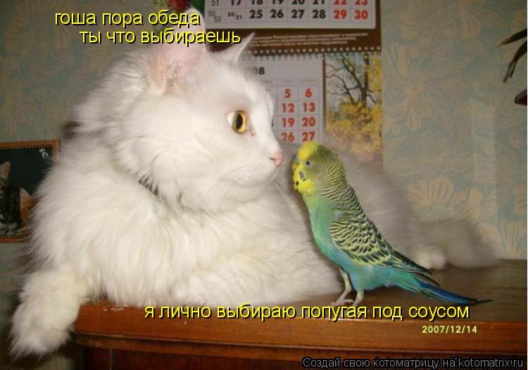 Котоматрица: гоша пора обеда  ты что выбираешь я лично выбираю попугая под соусом