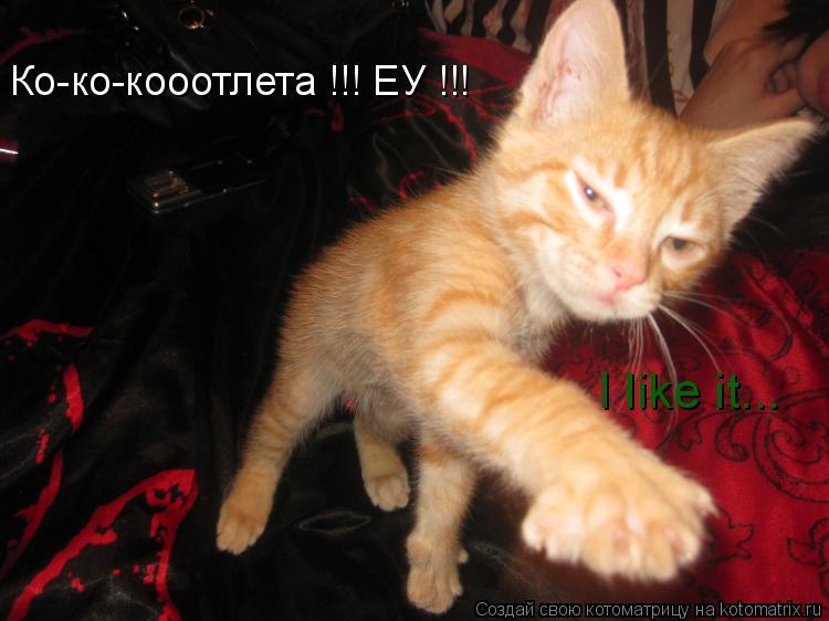 Котоматрица: Ко-ко-кооотлета !!! ЕУ !!! I like it...