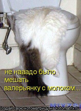 Котоматрица: валерьянку с молоком... мешать не нааадо было