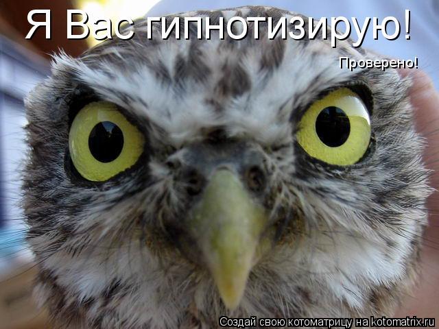 Котоматрица: Я Вас гипнотизирую! Проверено!