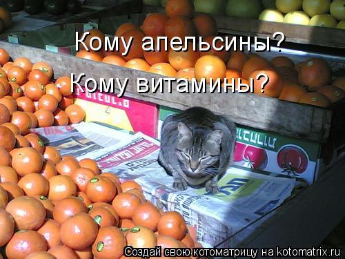 Котоматрица: Кому апельсины? Кому витамины?