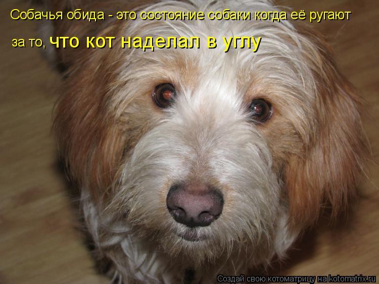 Котоматрица: Собачья обида - это состояние собаки когда её ругают за то , что кот наделал в углу