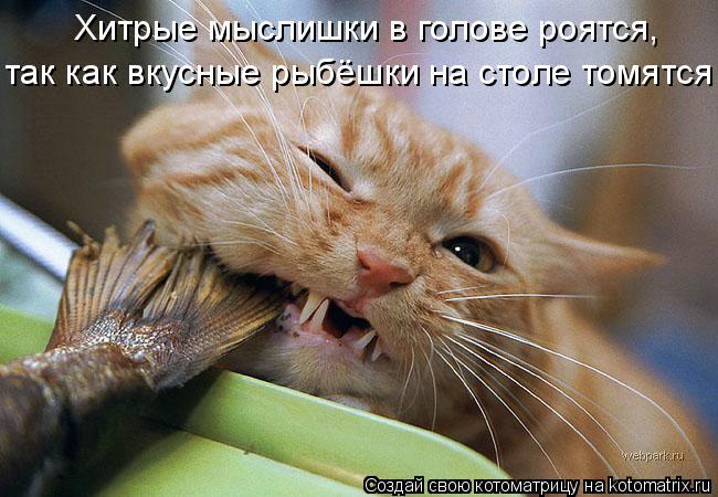 Котоматрица: Хитрые мыслишки в голове роятся,  так как вкусные рыбёшки на столе томятся