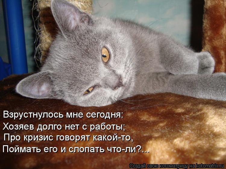 Котоматрица: Взрустнулось мне сегодня: Хозяев долго нет с работы; Про кризис говорят какой-то, Поймать его и слопать что-ли?...
