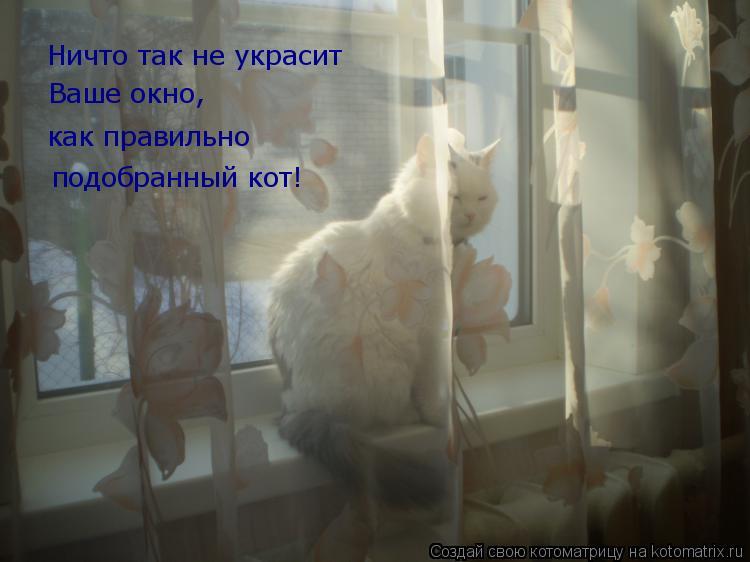 Котоматрица: Ничто так не украсит  Ваше окно, как правильно  подобранный кот!