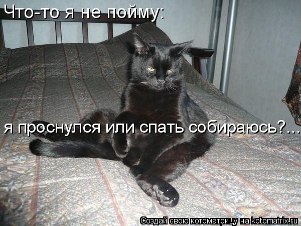 Котоматрица: Что-то я не пойму: я проснулся или спать собираюсь?...