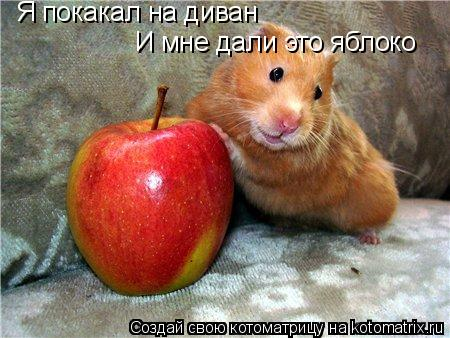 Котоматрица: Я покакал на диван И мне дали это яблоко