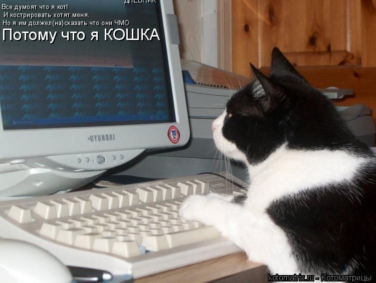 Котоматрица: ДНЕВНИК Все думоят что я кот! И кострировать хотят меня. Но я им должел(на)сказать что они ЧМО Потому что я КОШКА