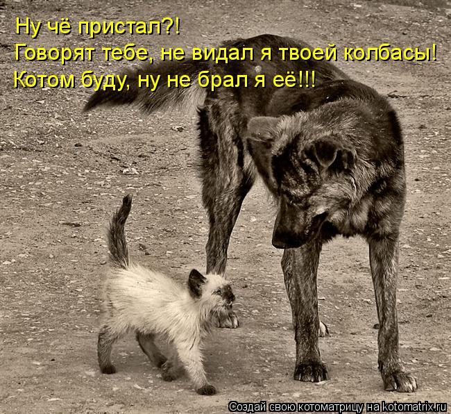 Котоматрица: Ну чё пристал?! Говорят тебе, не видал я твоей колбасы! Котом буду, ну не брал я её!!!