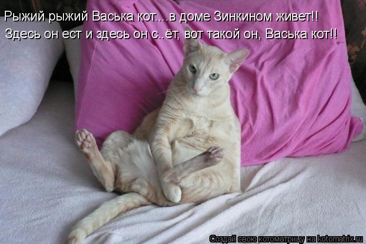 Котоматрица: Рыжий рыжий Васька кот....в доме Зинкином живет!! Здесь он ест и здесь он с..ёт, вот такой он, Васька кот!!