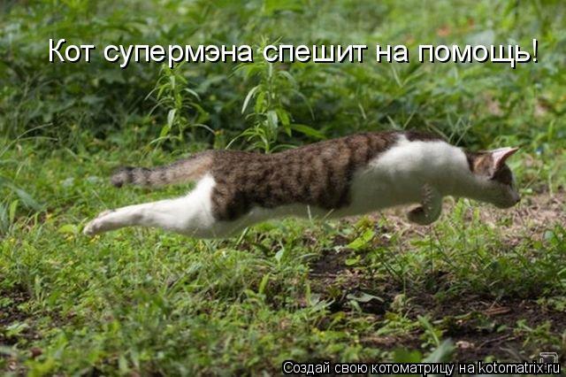 Котоматрица: Кот супермэна спешит на помощь!