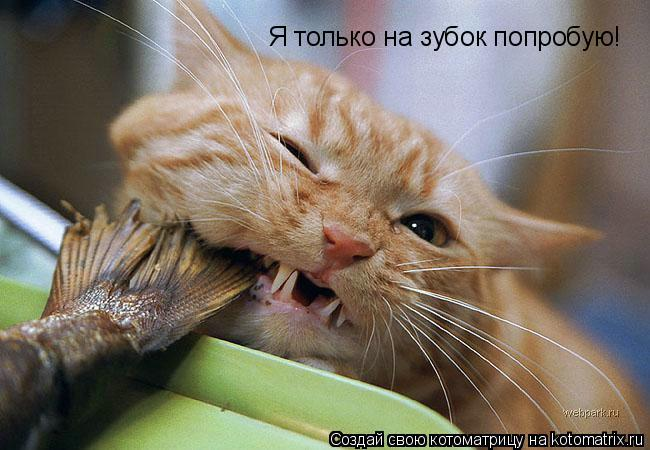 Котоматрица: Я только на зубок попробую!