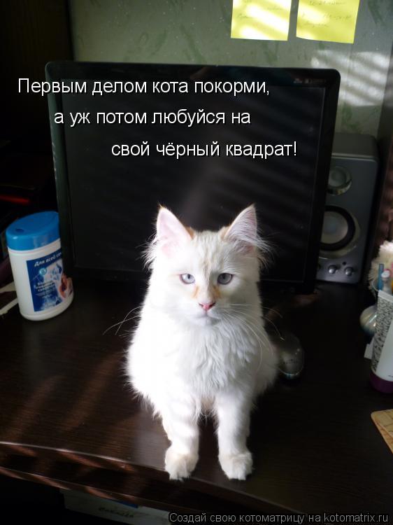 Котоматрица: Первым делом кота покорми, а уж потом любуйся на  свой чёрный квадрат!