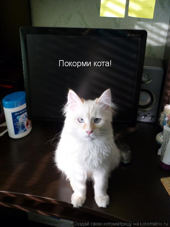 Котоматрица: Покорми кота!