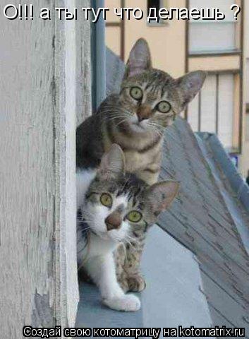 Котоматрица: О!!! а ты тут что делаешь ? О!!! а ты тут что делаешь ?