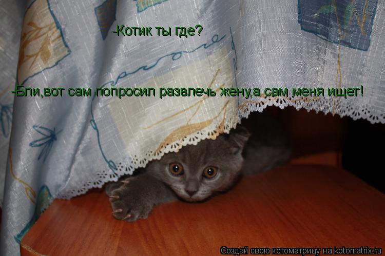 Котоматрица: -Котик ты где? -Бли,вот сам попросил развлечь жену,а сам меня ищет!
