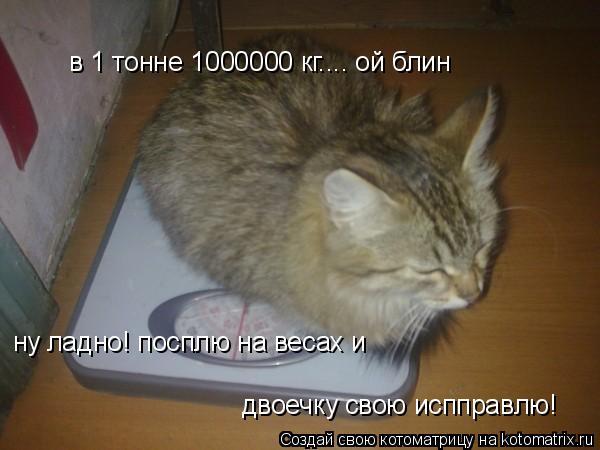 Котоматрица: в 1 тонне 1000000 кг.... ой блин ну ладно! посплю на весах и двоечку свою испправлю!