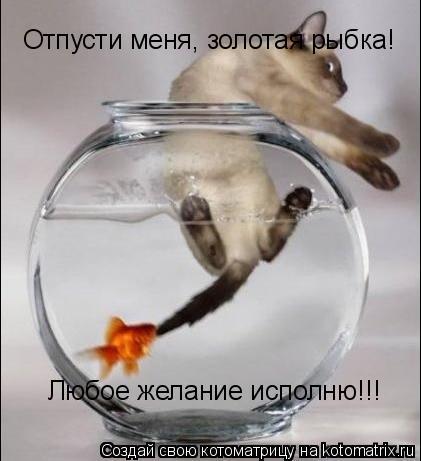 Котоматрица: Отпусти меня, золотая рыбка!  Любое желание исполню!!!