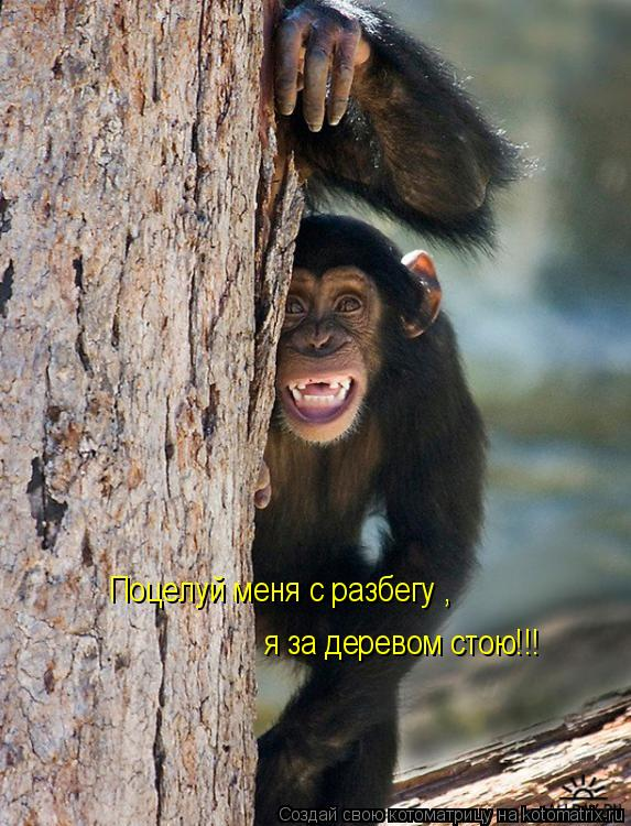 Котоматрица: Поцелуй меня с разбегу , я за деревом стою!!!