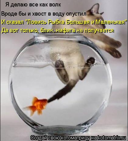 """Котоматрица: Я делаю все как волк Вроде бы и хвост в воду опустил И сказал """"Ловись Рыбка Большая и Маленькая"""" Да вот только, блин, нифига не получается"""
