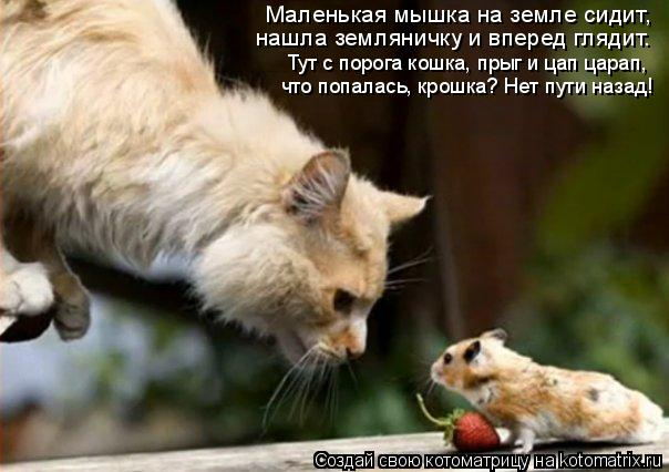 Котоматрица: Маленькая мышка на земле сидит, Тут с порога кошка, прыг и цап царап, что попалась, крошка? Нет пути назад! нашла земляничку и вперед глядит.