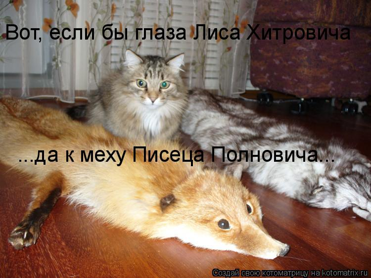 Котоматрица: Вот, если бы глаза Лиса Хитровича ...да к меху Писеца Полновича...
