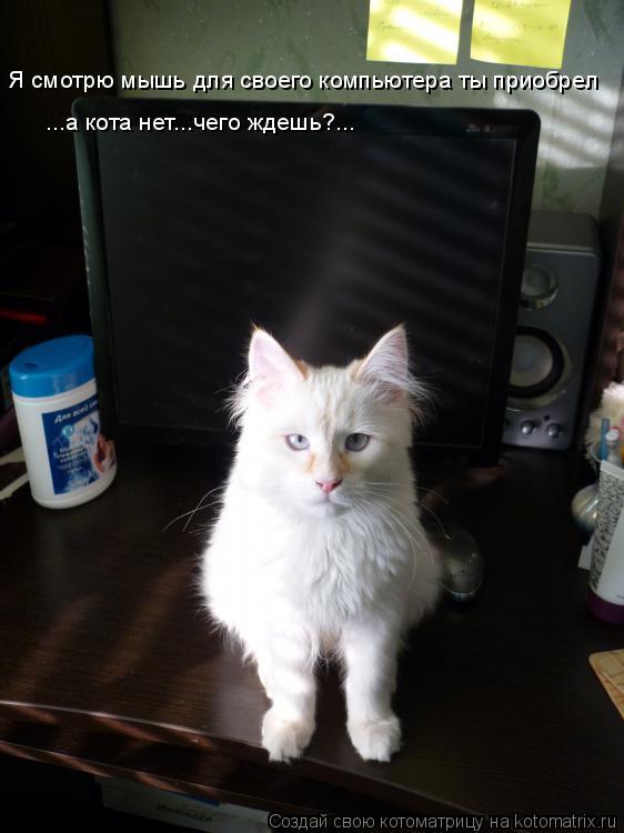 Котоматрица: Я смотрю мышь для своего компьютера ты приобрел ...а кота нет...чего ждешь?...