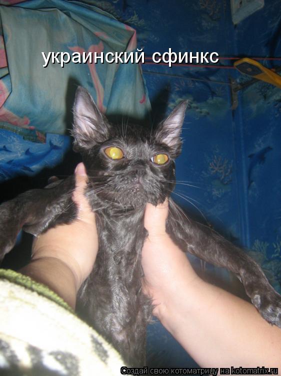 Котоматрица: украинский сфинкс