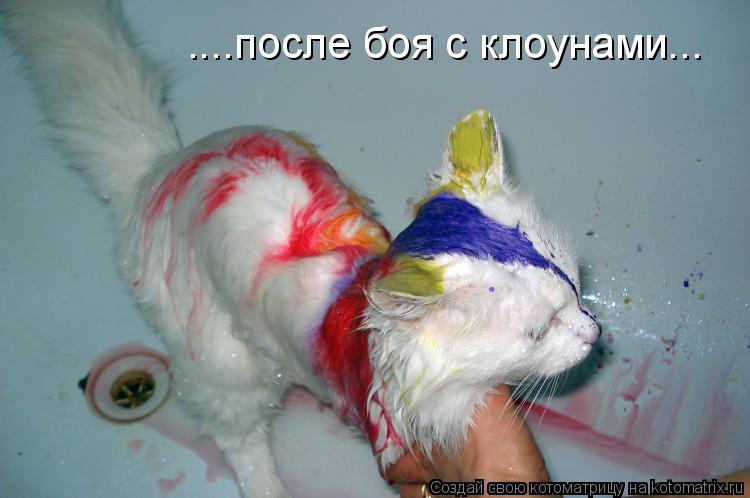 Котоматрица: ....после боя с клоунами...