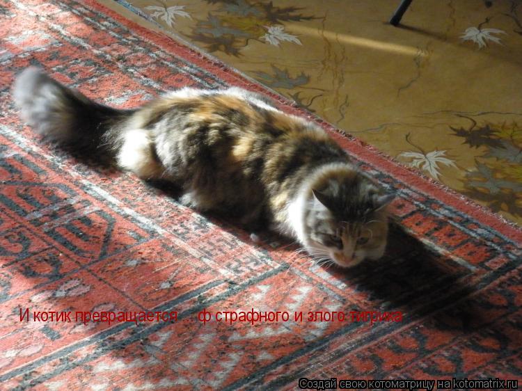 Котоматрица: И котик превращается ... ф страфного и злого тигрика