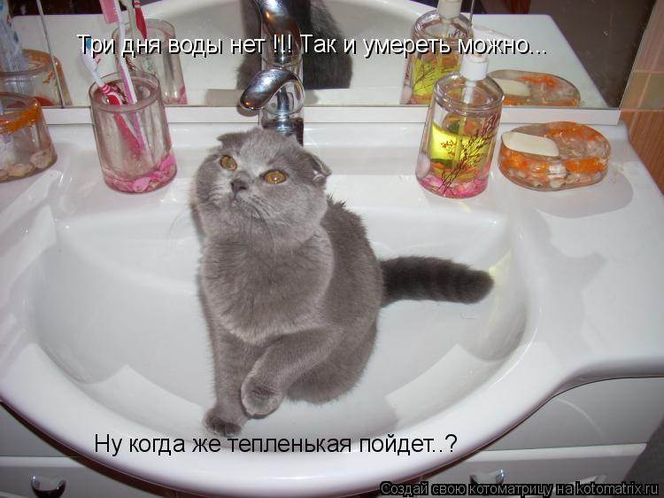 Котоматрица: Три дня воды нет !!! Так и умереть можно... Ну когда же тепленькая пойдет..?