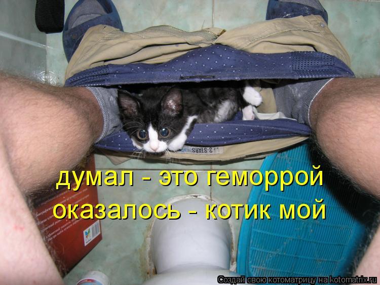 Котоматрица: думал - это геморрой оказалось - котик мой