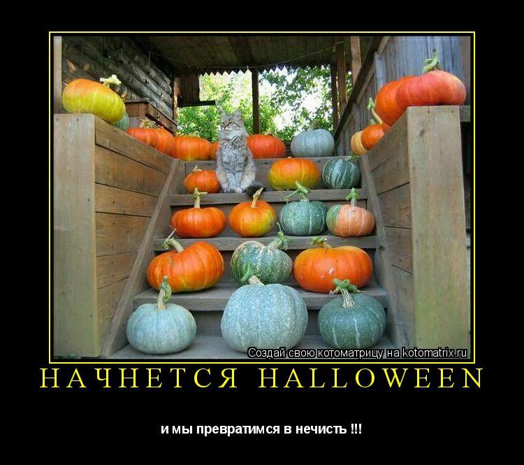 Котоматрица: Начнется Halloween и мы превратимся в нечисть !!!