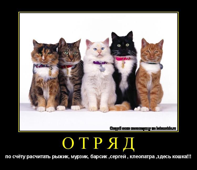 Котоматрица: отряд по счёту расчитать рыжик, мурзик, барсик ,сергей , клеопатра ,здесь кошка!!!