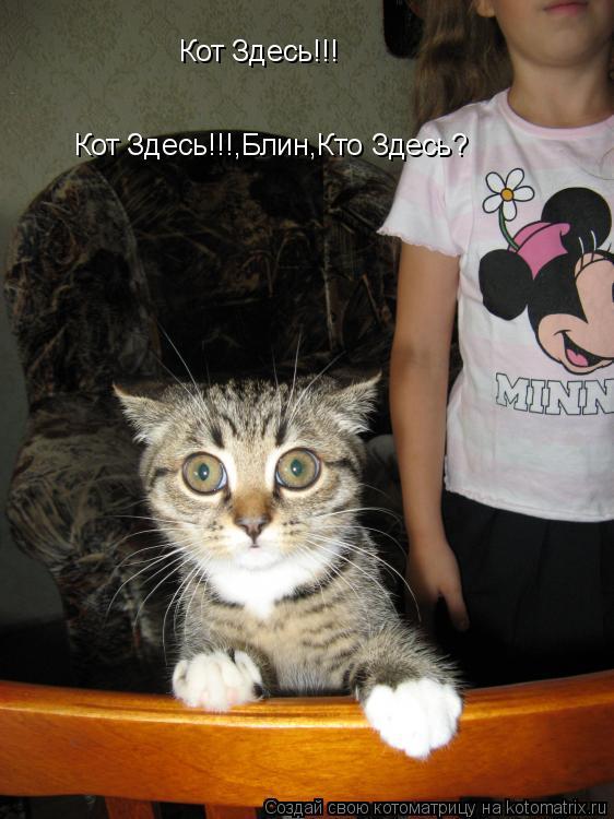 Котоматрица: Кот Здесь!!! Кот Здесь!!!,Блин,Кто Здесь?