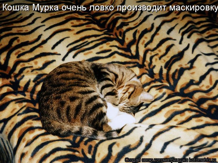 Котоматрица: Кошка Мурка очень ловко производит маскировку