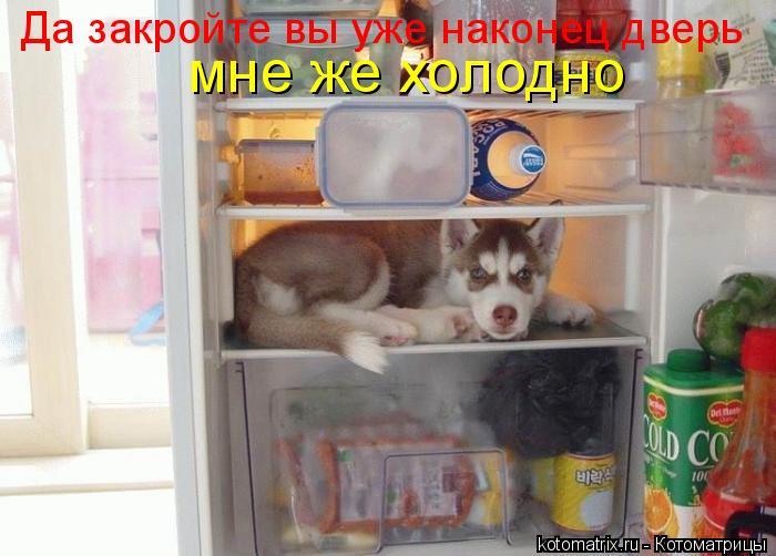 Котоматрица: Да закройте вы уже наконец дверь мне же холодно