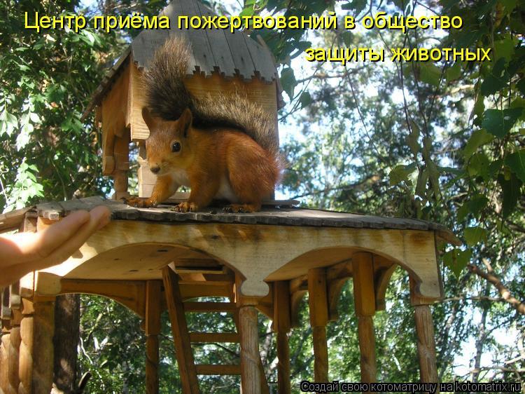 Котоматрица: Центр приёма пожертвований в общество защиты животных