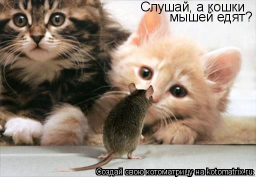 Котоматрица: Слушай, а кошки мышей едят?