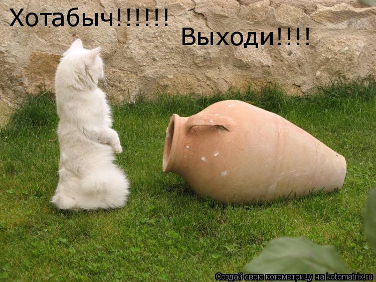 Котоматрица: Хотабыч!!!!!! Выходи!!!!