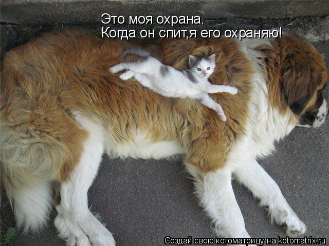 Котоматрица: Это моя охрана. Когда он спит,я его охраняю!