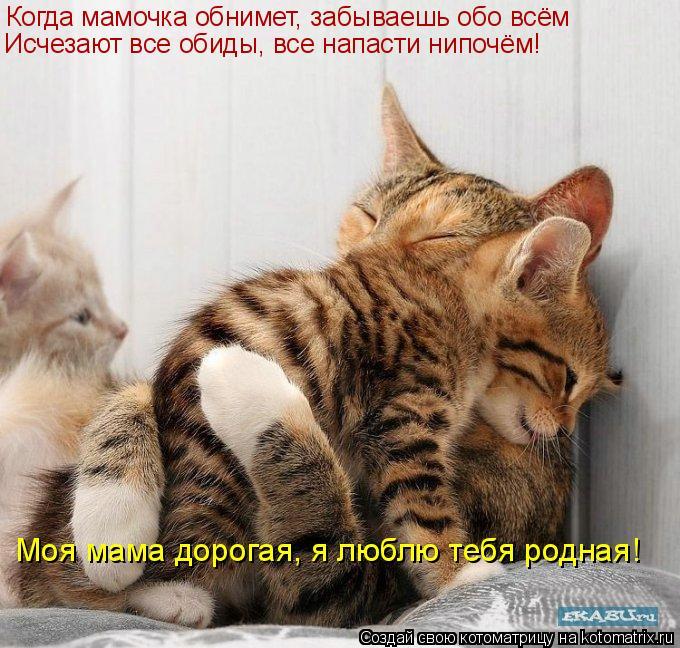 Котоматрица: Когда мамочка обнимет, забываешь обо всём Исчезают все обиды, все напасти нипочём! Моя мама дорогая, я люблю тебя родная!