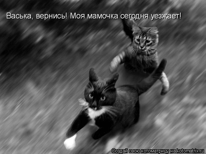 Котоматрица: Васька, вернись! Моя мамочка сегодня уезжает!
