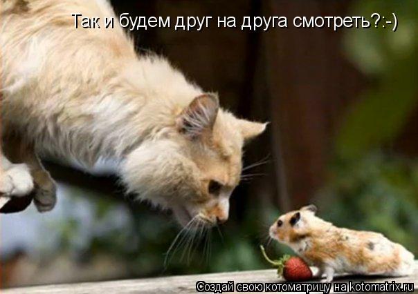 Котоматрица: Так и будем друг на друга смотреть?:-)