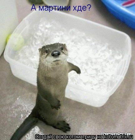 Котоматрица: А мартини хде?