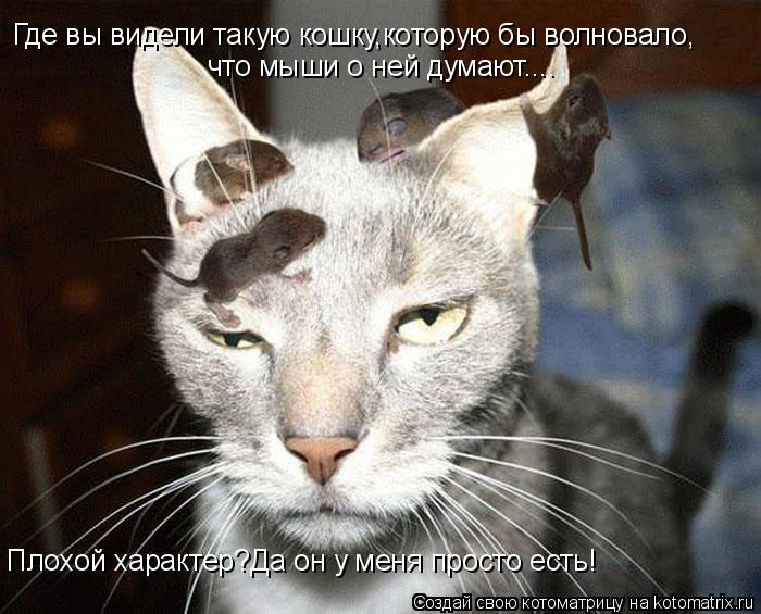 Котоматрица: Где вы видели такую кошку,которую бы волновало, что мыши о ней думают.... Плохой характер?Да он у меня просто есть!
