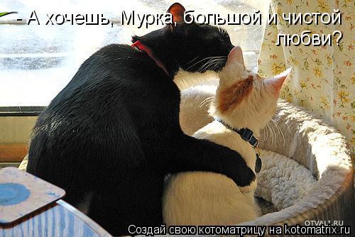 Котоматрица: - А хочешь, Мурка, большой и чистой  любви?
