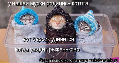 Котоматрица: у нашей мурки родились котята вот барсик удивится когда увидит рыженьково