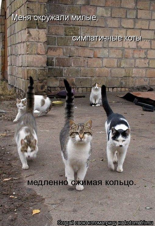 Котоматрица: Меня окружали милые,  симпатичные коты ... медленно сжимая кольцо.